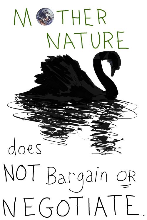drawing of black swan by Franke James