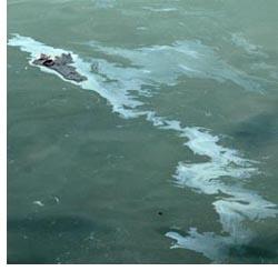 oil spill photo november 8 2007 by franke james